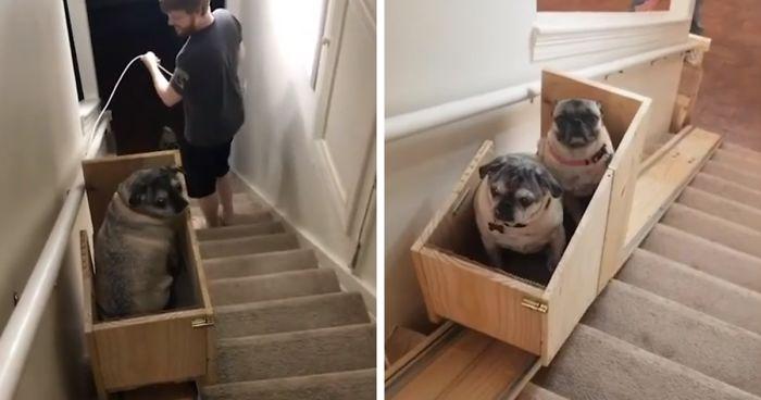 Dono De Cachorro Constrói Escada Elevatória Para Seus Três Adoráveis Pugs