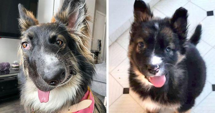 Conheça Brodie, O Cachorro Com Rosto Desfigurado Por Acidente Quando Era Filhote, Que Vai Se Tornar Um Cão De Terapia