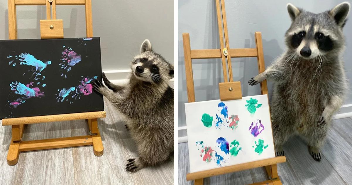 Este Guaxinim Usa Suas Patinhas Para Pintar Lindos Quadros