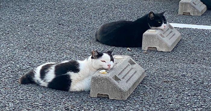 10 Gatos Muito Engraçados Que Usam Pára-Choques De Estacionamento Como Travesseiros