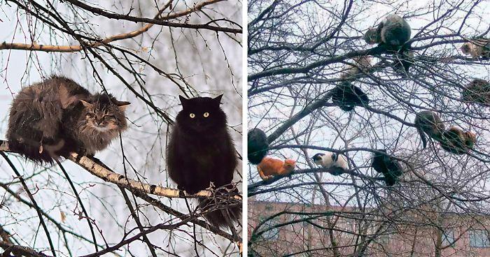 30 Fotografias De Pássaros Que Parecem Gatos