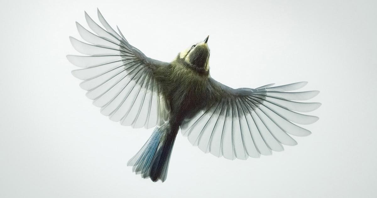 Retratos De Pássaros Destacam Seu Movimento Gracioso Congelado No Tempo