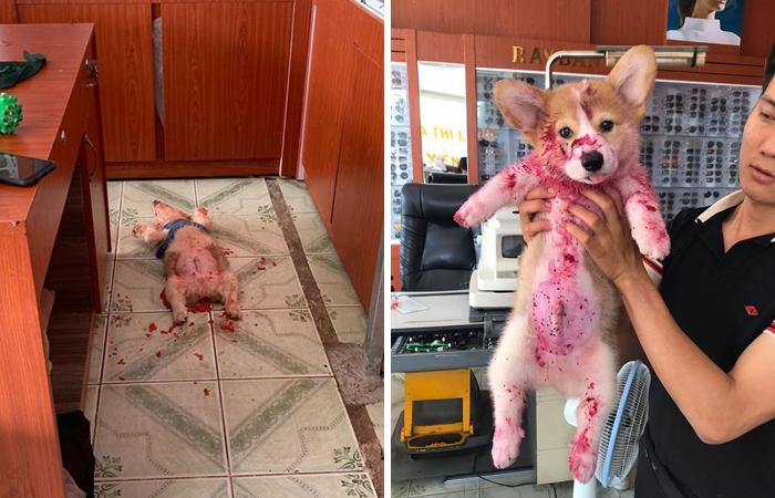 24 Vezes Que Animais De Estimação Assustaram Seus Donos