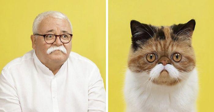 17 Fotografias De Gatos Que Se Parecem Com Humanos