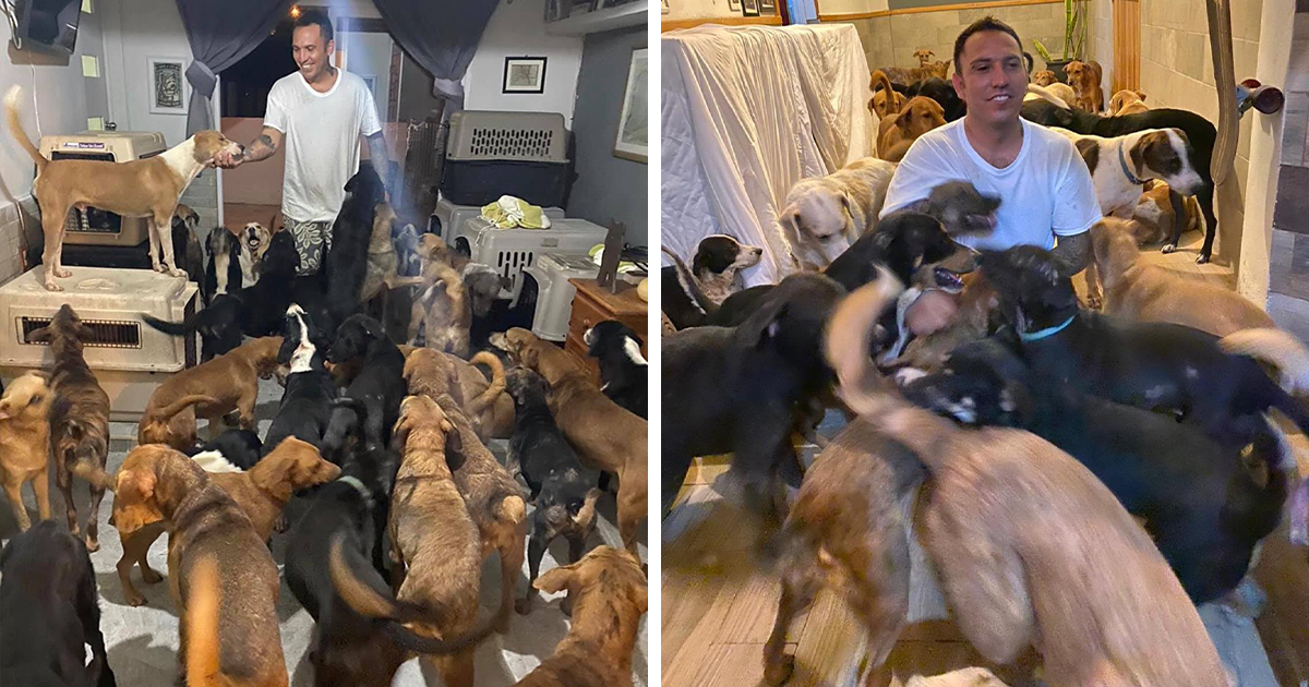Homem Resgata Animais Perdidos Durante Acidente De Furacão