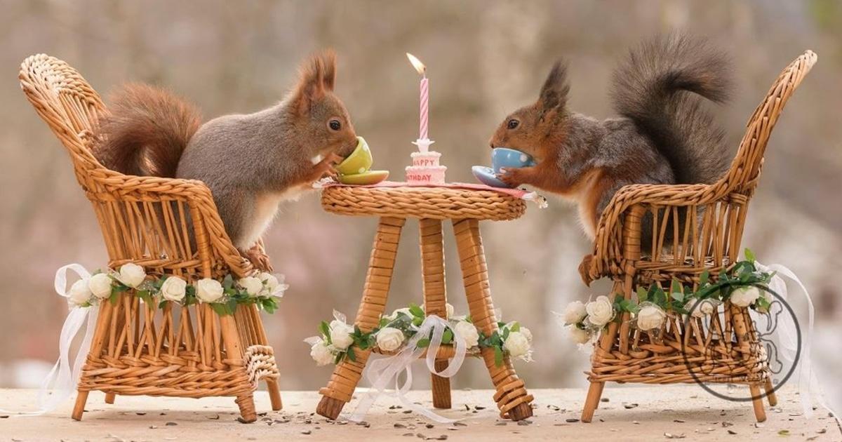 23 Fotos De Esquilos Curiosos E Adoráveis Interagindo Com Pequenos Objetos