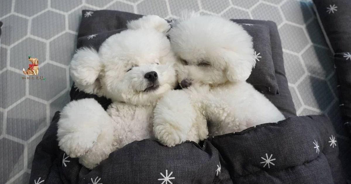 Esta Creche Para Cachorros Compartilha Fotos Adoráveis De Seus Filhotes Durante A Soneca