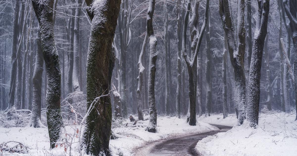 30 Fotografias De Estradas E Caminhos Desta Floresta Durante As Estações Do Ano
