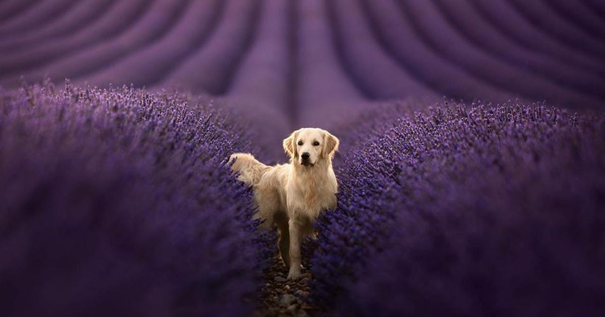 Cães Majestosos Fotografados Em Lindas Paisagens Naturais