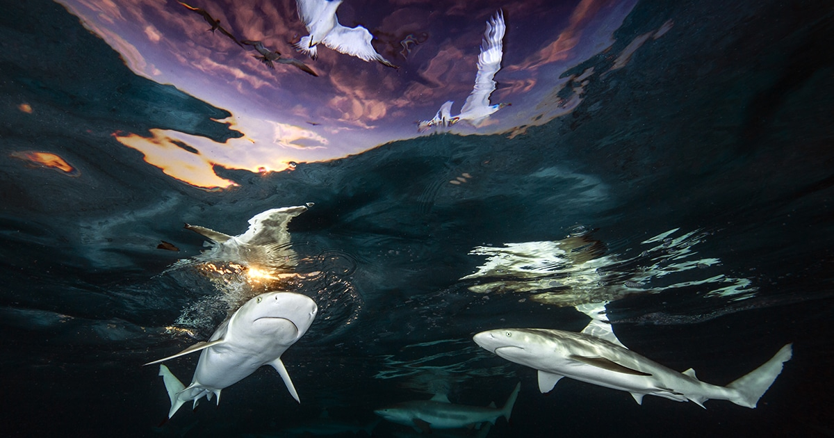 Conheça Os Vencedores Do Concurso De Fotógrafo Subaquático De 2021