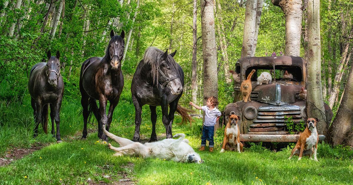 Projeto Fotográfico Emocionante De Famílias E Todos Os Seus Animais