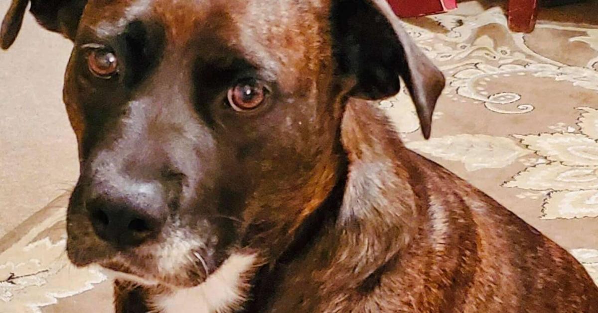 Conheça Ginnie, A Cachorra Maltratada Que Finalmente Encontrou Um Lar