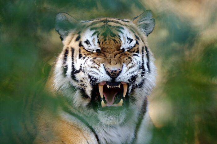 Aqui Estão As 40 Fotos De Animais Selvagens Mais Deslumbrantes De Todos Os Tempos