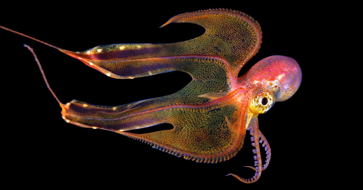 Fotos Subaquáticas Mostram A Impressionante Diversidade Do Oceano Atlântico