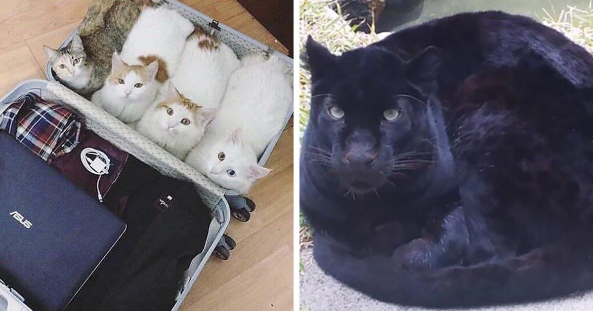 41 Dos Gatos Mais Fofos Abraçando Sua Versão De Pão