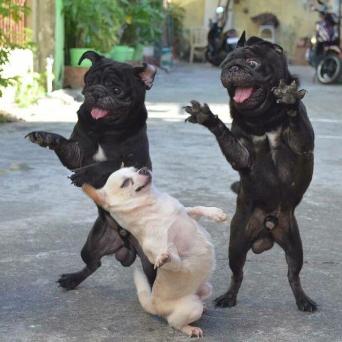 59 Fotos Hilárias De Cachorros Que Vão Alegrar Seu Dia
