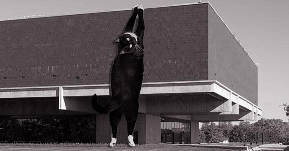 87 Combinações Adoráveis De Arquitetura E Gatos Gigantes
