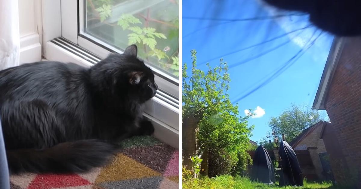 Dono De Gato Anexa Pequena Câmera Bluetooth Ao Colar De Seu Pet Para Descobrir Sua Vida Secreta