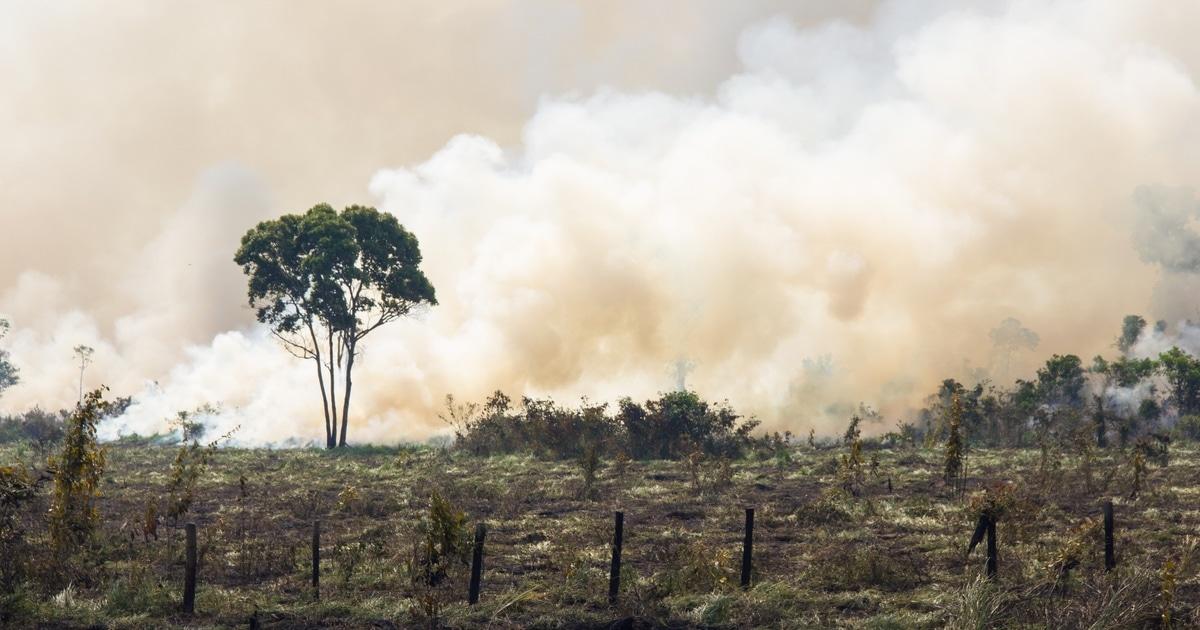 A Floresta Amazônica Está Liberando Mais Carbono Do Que Absorvendo