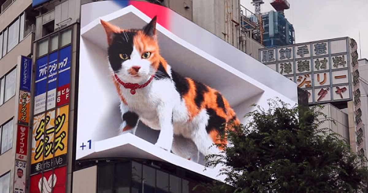 Este Gato Está Em Um Dos Maiores Outdoors De Tóquio