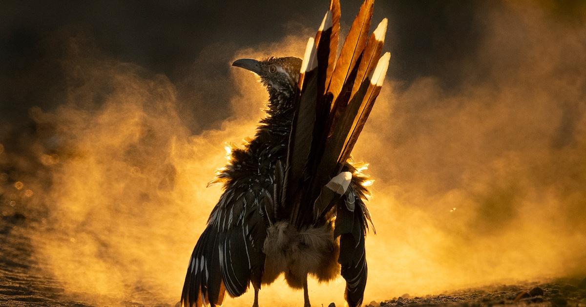 As Melhores Fotografias Do Prêmio Audubon de 2021