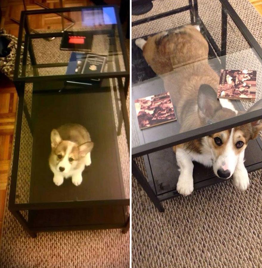 Antes e depois de cães e donos