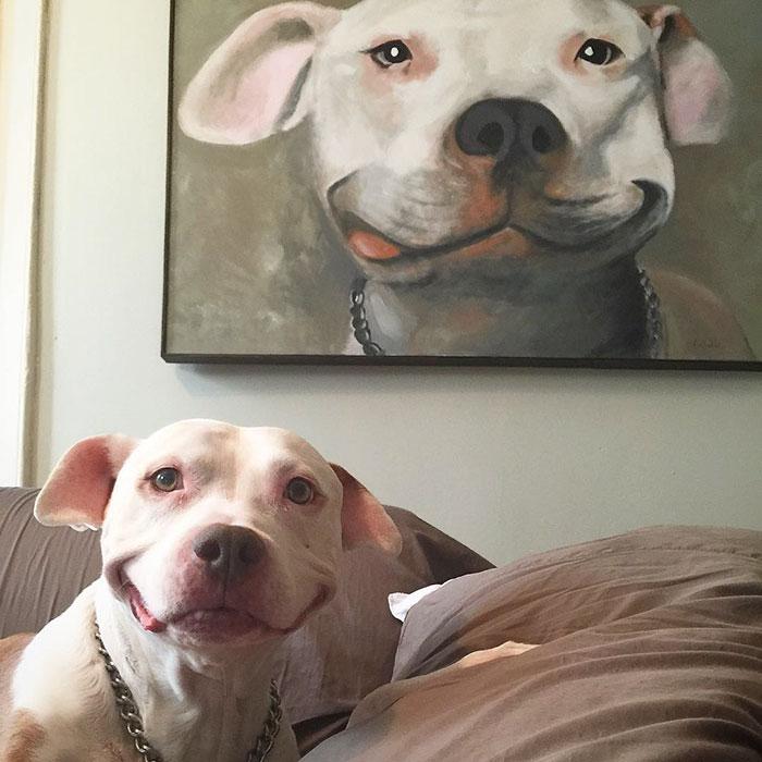 Cachorro abandonado não para de sorrir depois de ser adotado